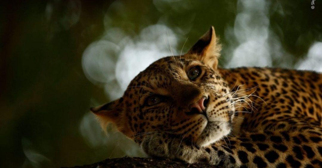 Wildlife Photographer of the Year: a Milano gli scatti premiati dal Natural History Museum di Londra